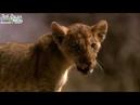 Львиное Королевство - Кровная вражда