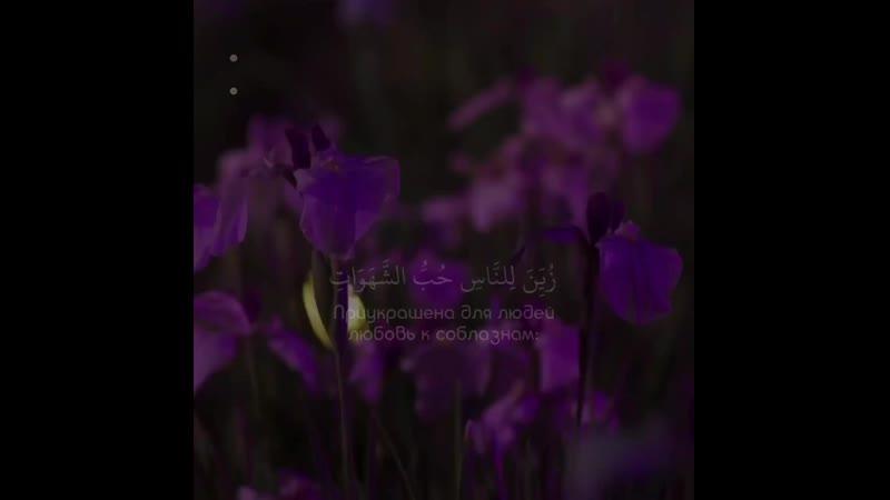 Чтец Abdul Rohman MosaadSurat « 3 - Али Имран »