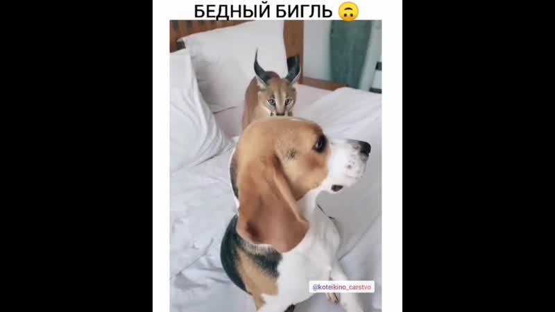 Не позавидуешь песику)