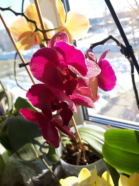 ПРЕВРАЩАЕМ 1 ОРХИДЕЮ В 100! РАСКРЫВАЕМ СЕКРЕТЫ РАССАДКИТе, кто уже опробовали этот метод, не могут налюбоваться красотой орхидей в своем доме.Как улучшить рост корнейКупи мох сфагнум, который
