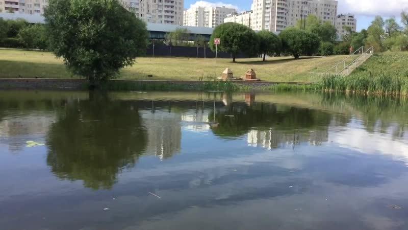 Черневский пруд Парк в Южном Бутово