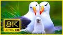 Птичье Царство