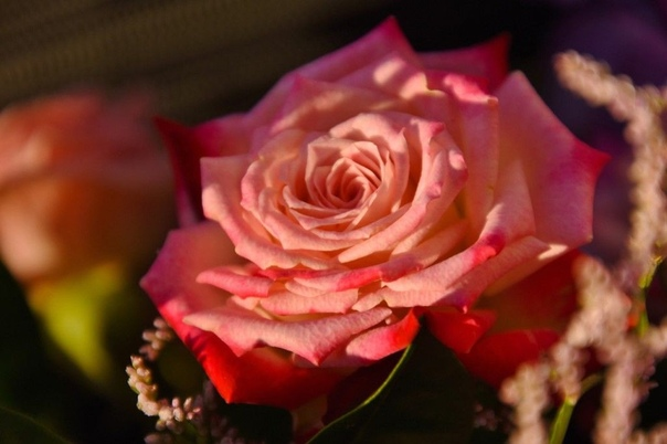 СУПЕР СРЕДСТВО ДЛЯ ЗАЩИТЫ РОЗ ОТ РЖАВЧИНЫ, МУЧНИСТОЙ РОСЫ И ПЯТНИСТОСТИ! Для защиты роз от от ржавчины, пятнистости и мучнистой росы хорошо помогает следующее средство.Потребуется:1 столовая
