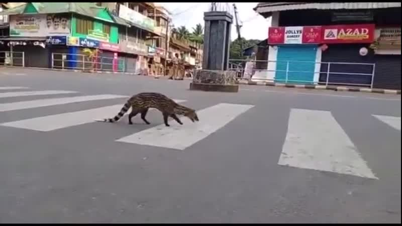 A critically endangered Malabar civet was seen for the first time since the 1990s during the COVID 19 lockdown in India
