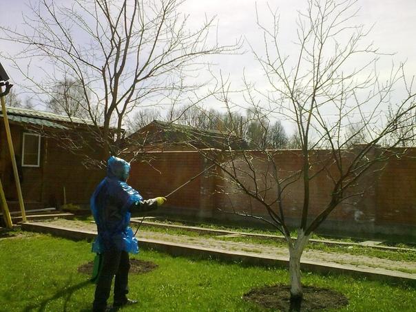 ЧЕМ ОПРЫСКИВАТЬ ДЕРЕВЬЯ ОСЕНЬЮ Для получения богатого урожая, осеннее и весеннее опрыскивание фруктовых деревьев является обязательной процедурой, . Ведь благодаря проведенному опрыскиванию,