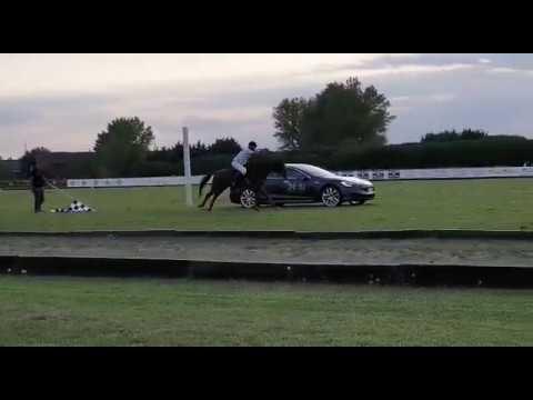 Drag race tra una Tesla Model S P100D ed un cavallo da Polo
