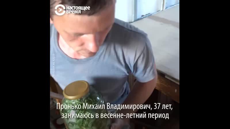 """""""Человек на карте""""_ Иван-чай от Михаила с Алтая"""