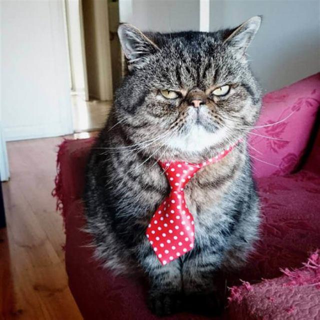 A что другого цвета галстука не было?)))