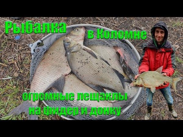 Москва река Коломна Крупный лещ на фидер и донки Отчет о рыбалке