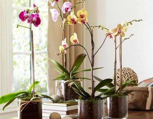ЗИМНИЙ УХОД ЗА ОРХИДЕЕЙ 1.Независимо от времени года орхидеи нуждаются в свежем воздухе, они хорошо реагируют на проветривание комнаты, но сквозняков не переносят.2. Как правило, они нормально