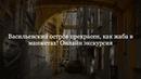 Васильевский остров прекрасен, как жаба в манжетах! Онлайн экскурсия с Константином Шолмовым
