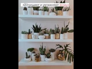 6 причин поселить в доме комнатные растения прямо сейчас