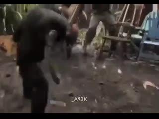 Да начнётся восстание планеты обезьян