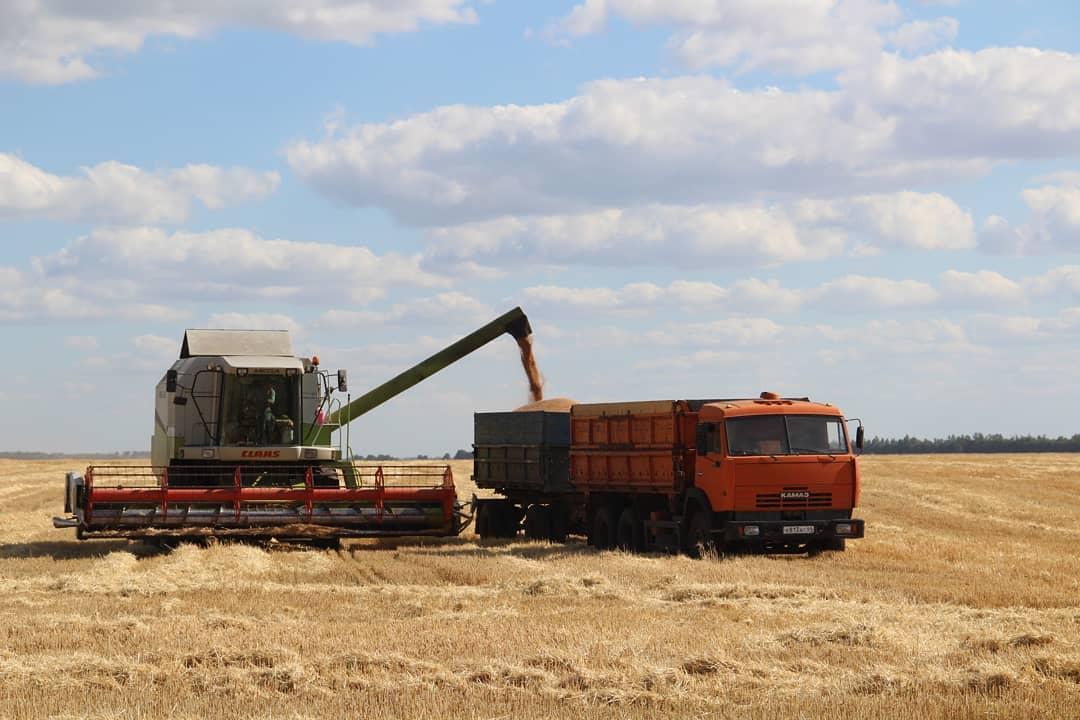 Петровские аграрии собрали более 105 тысяч тонн зерна нового урожая