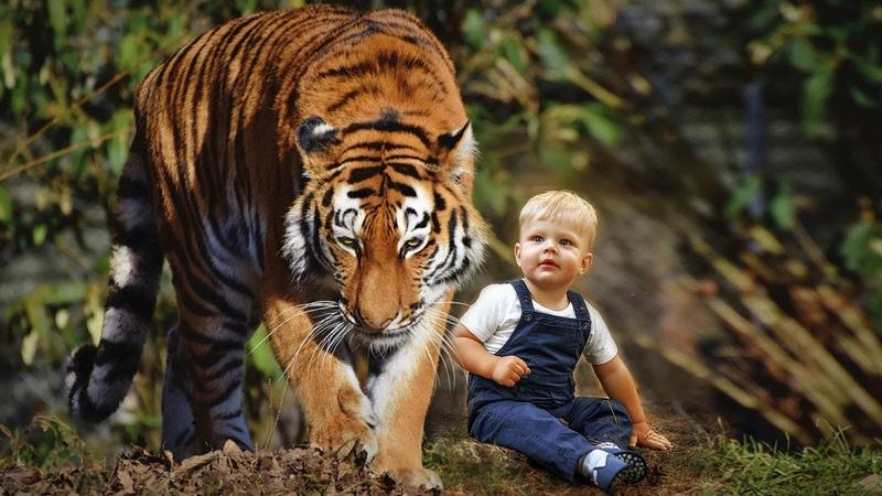 ТИГРИЦА нашла в лесу 3 х летнего мальчика и потащила к себе в логово