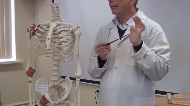 Кости верхней конечности проф В А Изранов