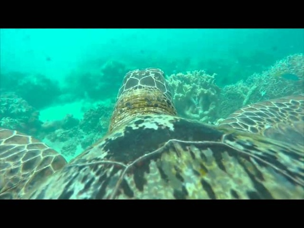 Amazing Turtle's Eye View of the Great Barrier Reef WWF Australia