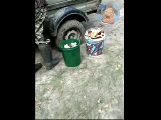 Сходили по грибы... Вот так улов))))