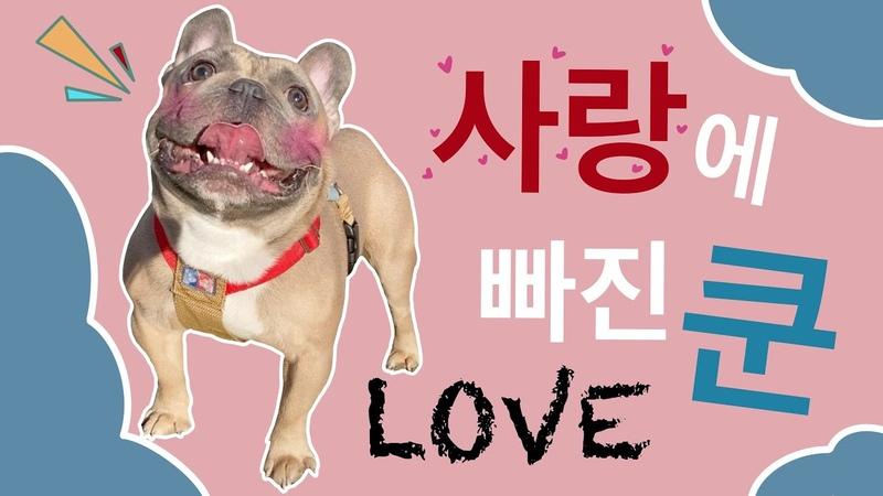 I went to Wirye Starfield I fell in love with Fluffy Dachshund French bulldog Kun
