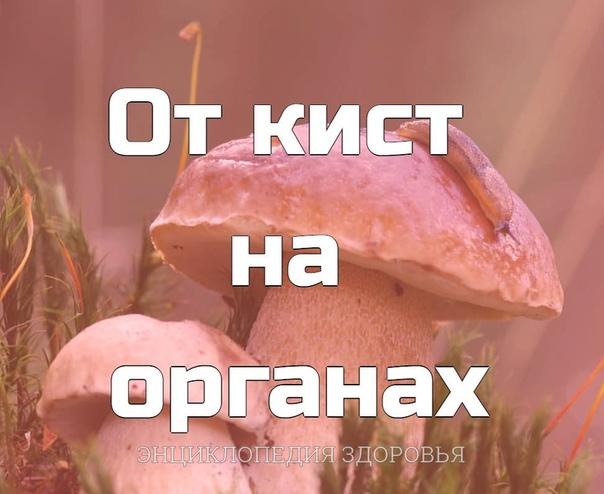 Белый гриб От кист на органах