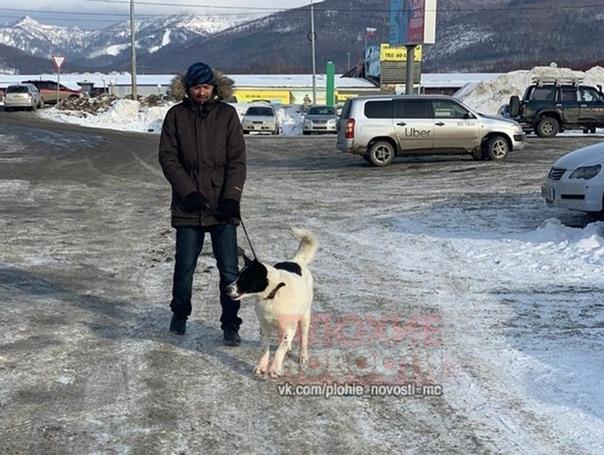 Чудовищная история произошла на Сахалине несколько дней назад В конце января в приют для бездомных животных «Пес и кот» приехала женщина, которая сказала, что хочет взять молодую крупную собаку