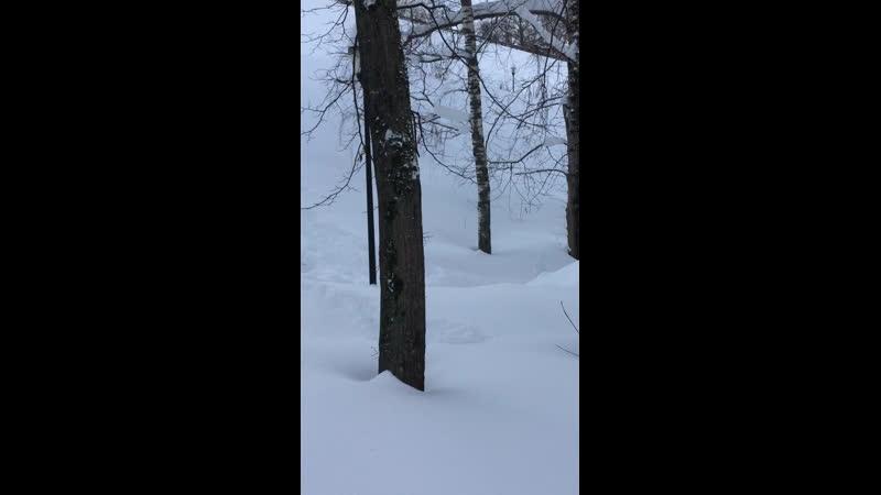 Зимний чудесный любимый лес у дома 🤩 Александровский сад