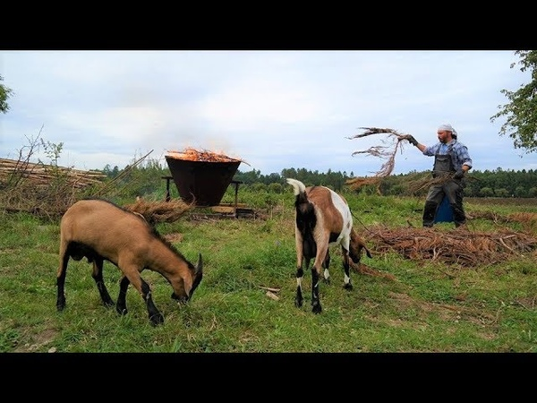 Život na vsi Žitel a PRAuhel chov pěstování komunita