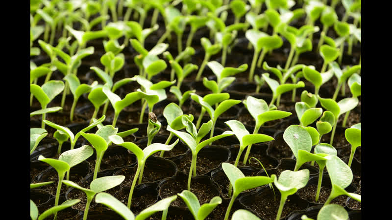 Приготовление грунта для посева семян. Часть 3 заключительная.