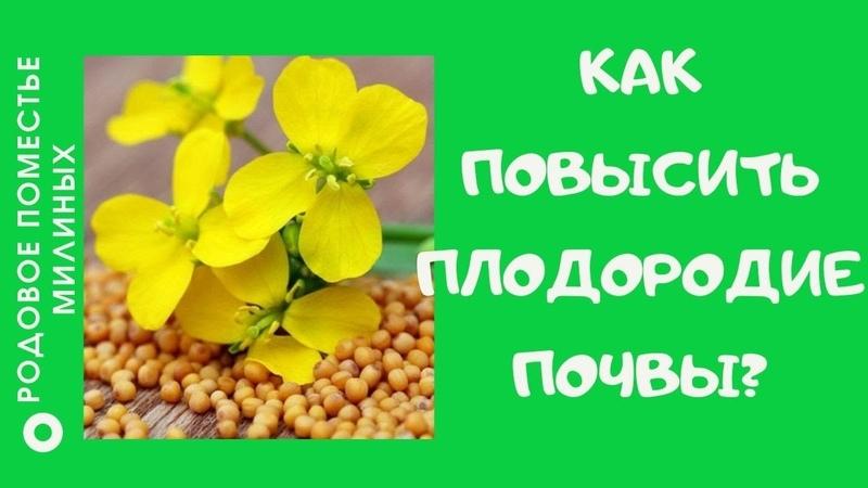 Сидераты помогают сохранить и улучшить плодородие почвы