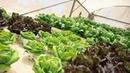 Устойчивая гастрономия в Израиле - ферма посреди Тель Авива