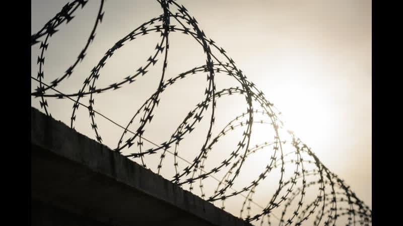 Волчье логово в Дроздах укрепляет свои стены