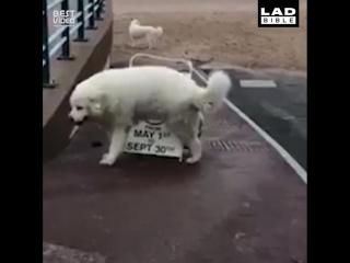 Без собаки жизнь скучна!