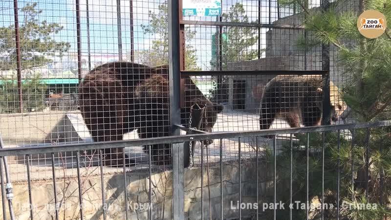 Хрупкий мир в медвежьей семье