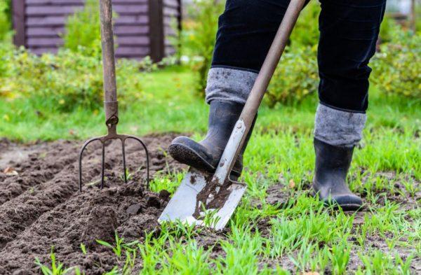 Какие работы проводятся в мае в огороде и в саду Полезные советы для большого урожая