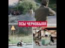 В сериале «Чернобыль» показали отстрел домашних животных - Москва FM