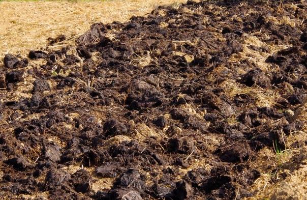 Когда и как правильно вносить навоз в почву