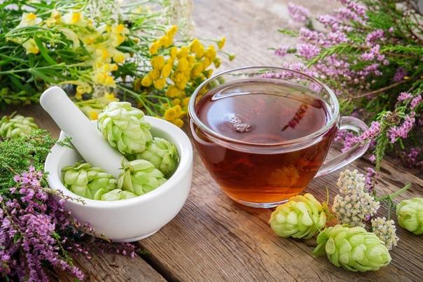 Как использовать хмель в медицинских целях При приготовлении и использовании настоев, отваров, настоек или травяных чаев с хмелем необходимо соблюдать дозировку. Приготовление настоя из зеленых