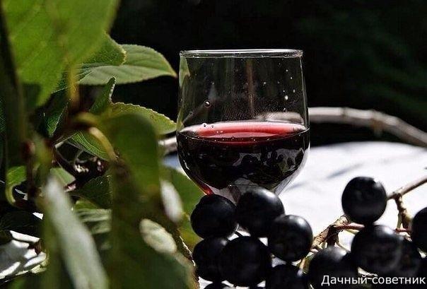 НАЛИВКА ИЗ ЧЕРНОПЛОДНОЙ РЯБИНЫ Три проверенных рецепта Начну с достаточно популярного рецепта с вишневыми листьями. В большинстве источников этот напиток идентифицируют как ликер, но я с ними не