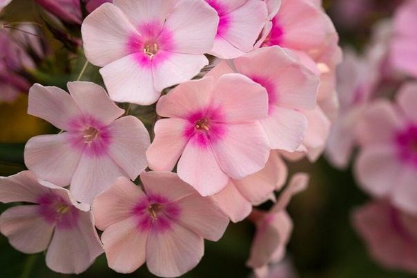 Какой минус выдерживают цветы без укрытия