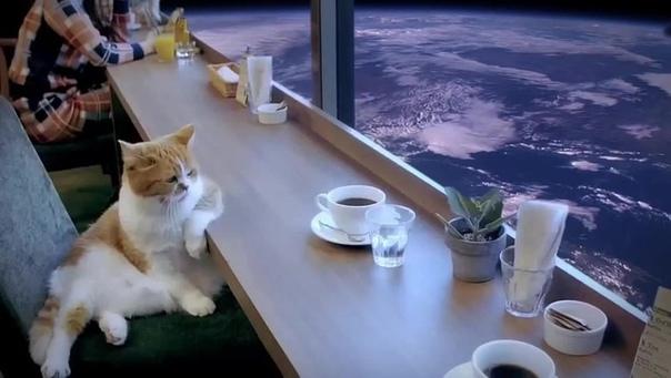 Три четверти Человек три четверти своего времени смотрит на землю. Кот три четверти времени смотрит на небо. Если Человеку куда-нибудь надо, он садится и едет в автобусе. Кот всегда бежит по