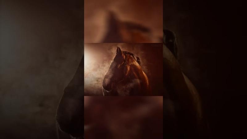 Бекстейдж конной фотосессии. Жеребец Кондор