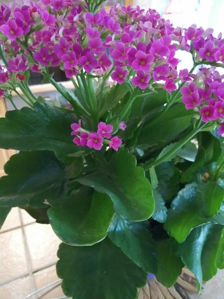 Доброе время суток. Вот подарили цветок, но не знаю что это и как за ним ухаживать. Может кто подскажет,