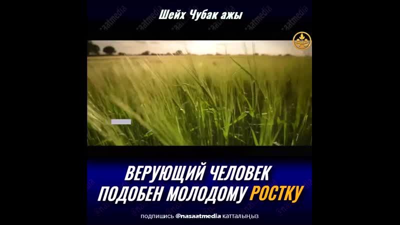ВЕРУЮЩИЙ ЧЕЛОВЕК ПОДОБЕН МОЛОДОМУ РОСТКУ