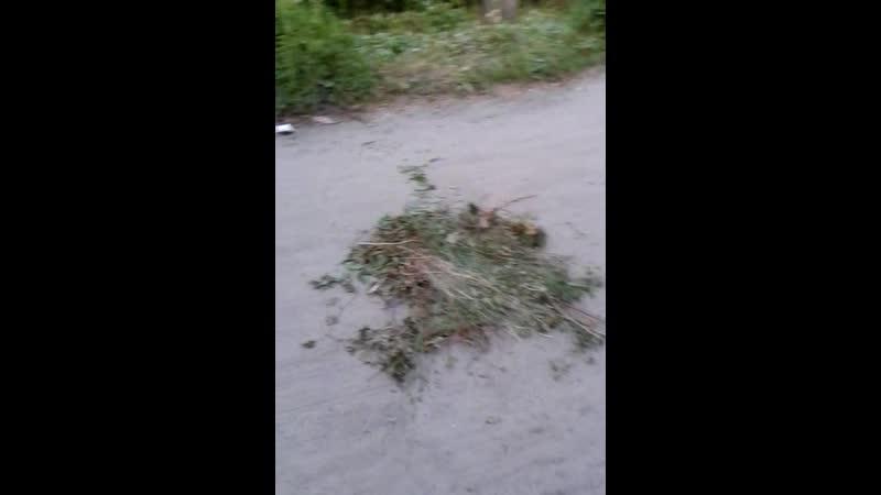 18 19 июня соседи продолжают провоцировать подбрасывать мусор под двор и на дорогу