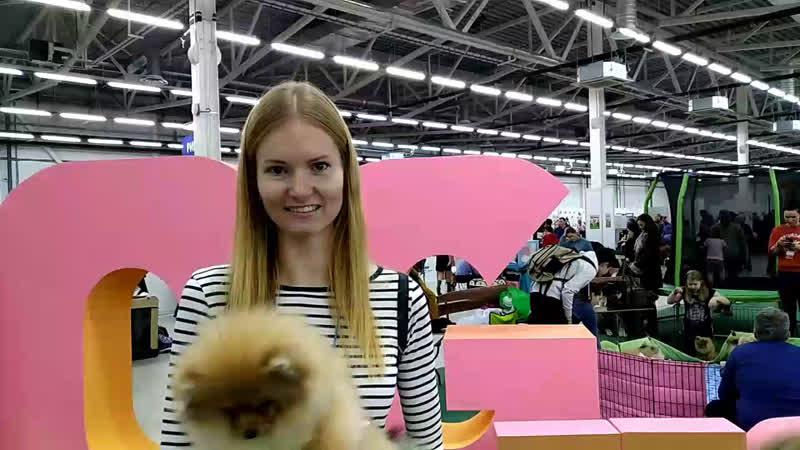 Стрим 59.RU: выставка собак на Пермской ярмарке