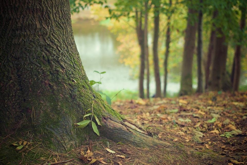 Организации Марий Эл займутся спасением деревьев
