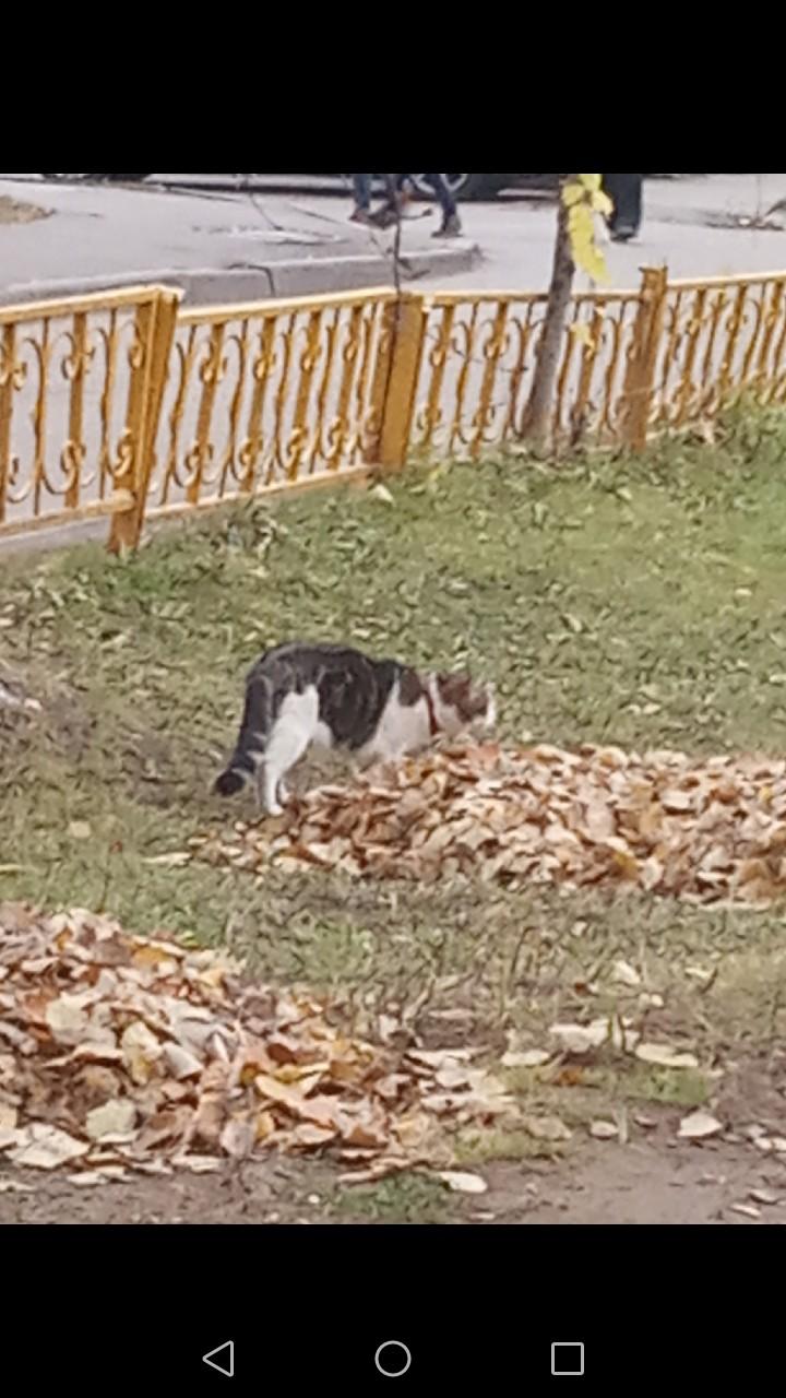 В районе улица Котовского 7 бегает кот,