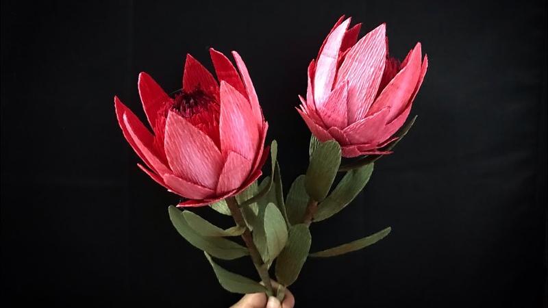 Bella's CraftHow to make Protea flower by crepe paperHướng dẫn làm hoa bình mật bằng giấy nhún