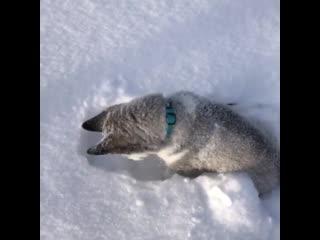 Снежооооок, ты где!