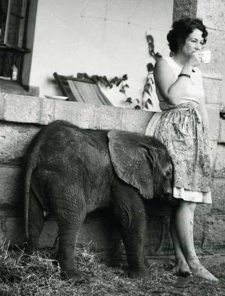 Как жаль, что у меня нет слоненка Если бы у меня был слоненок, я бы кормила его кислыми яблоками, пекинской капустой, нулевым творожком, вяжущим рот хуже хурмы, а также поила бы однопроцентным